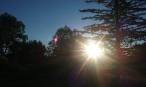 Sun shines through trees